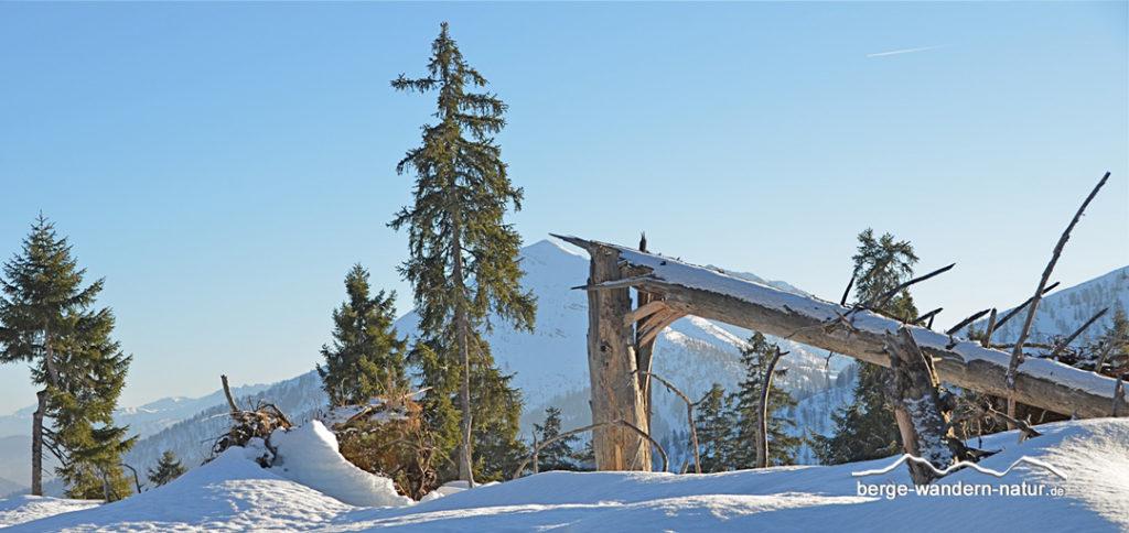 """""""Bergurwald"""" in einer Winterlandschaft"""
