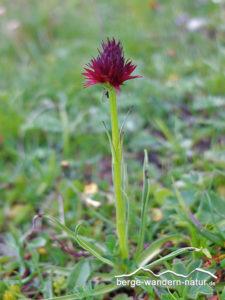 orchideenwanderung