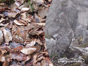 bergwandern-fuer-naturbeobachter