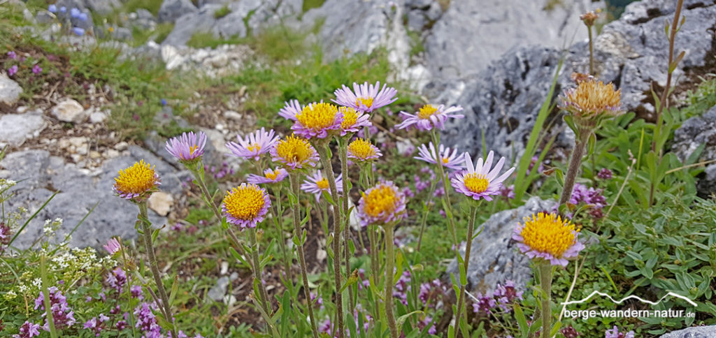 Wandern Rofan - 3 Tage Naturerlebnis • Berge-Wandern-Natur.de