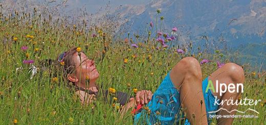 Alpenkräuterwanderung im Karwendel und Rofan
