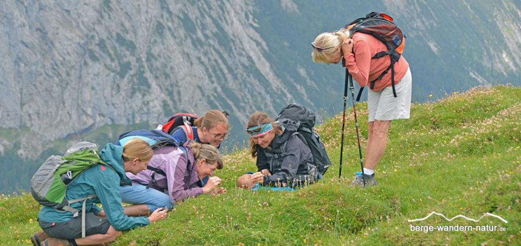 interessierte Wandergruppe bei einer Kräuterwanderung