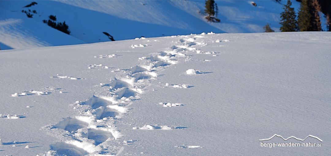 """Schneeschuhwanderung mit Iglubau für """"Eisbären"""""""