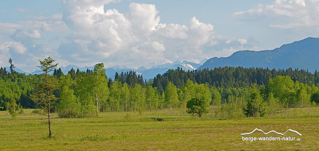naturbeobachtung-ellbach-moor