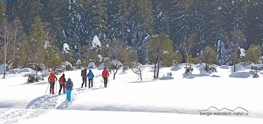 Schneeschuhwanderer in Waldlichtung