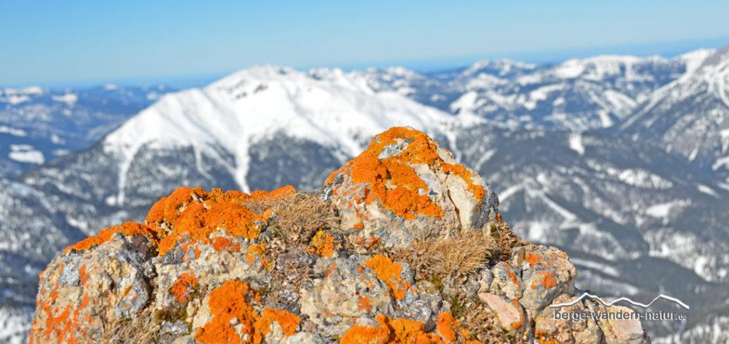 gelbe Flechte auf Felsen