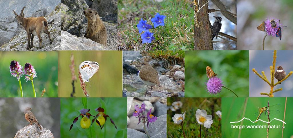 Flora und Fauna im Naturpark Karwendel