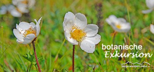 botanische Exkursion im Karwendelgebirge