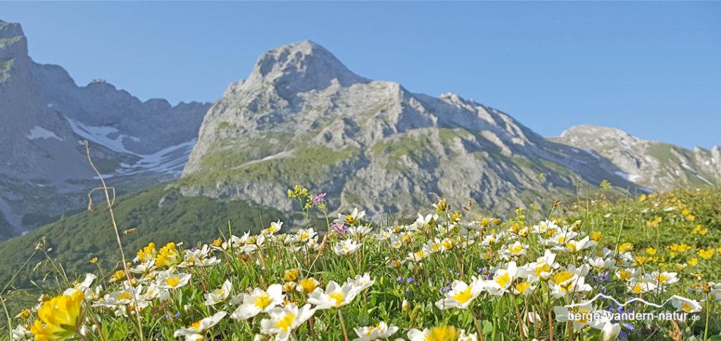 gefuehrte-alpenblumen-wanderung-karwendel