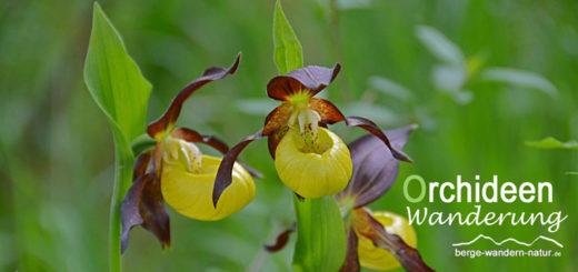gefuehrte-orchideen-wanderung