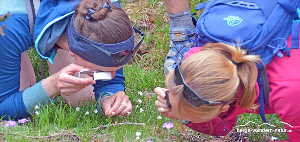 Wandergruppe beim Blumen betrachten mit Einschlaglupe