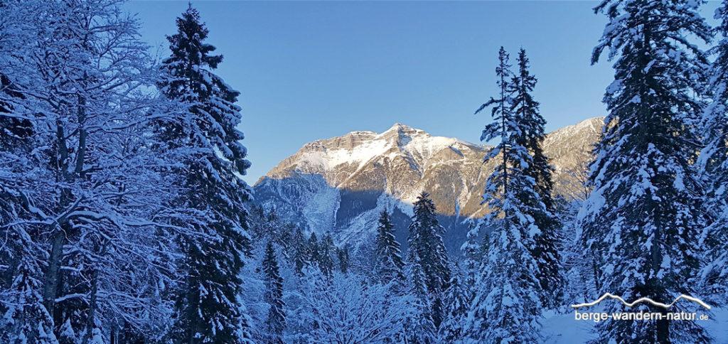 verschneiter Winterwald im Hintergrund Blick auf den Guffert