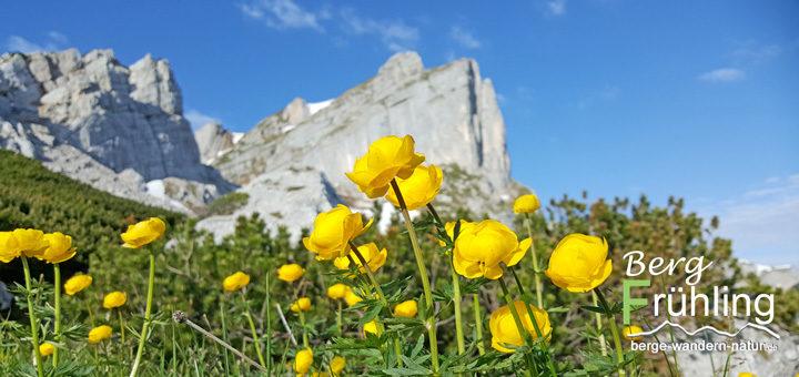 alpenflora und fauna im fruehling