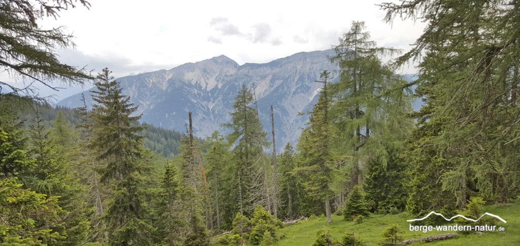 Bergmischwald am Achensee