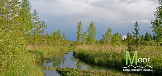 ellbach-moor-naturschutzgebiet