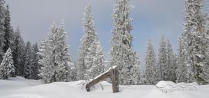 LASI Schneeschuhwandern